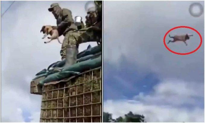 Indignante¡, soldado mata un perro mientras lo graban - TuPerfil.net